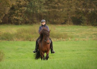 Hof-Stubbenkamp Island Pferde Beritt Unterricht Hemmoor